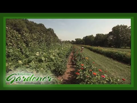 Farming On A Small Scale   Volunteer Gardener