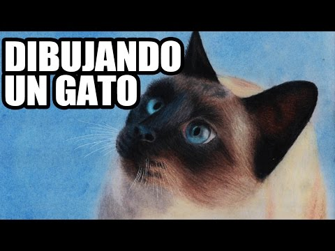 Dibujando un gato siamés realista | Speed Drawing