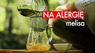 Zioła na alergię: MELISA. Czajnikowy.pl