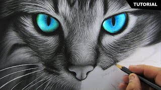How To Draw Realistic Cat For Beginners Fur Drawing Technique Youtube