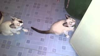 Котенок зомби