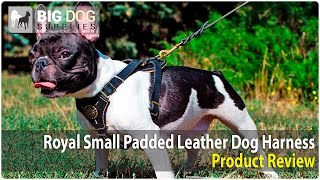 Funny Puppies Wearing Stylish Leather Dog Harness
