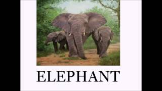 Animal Sounds and Names LOTS of Animals - Educational for Babies - Toddlers - Preschool Age Kids
