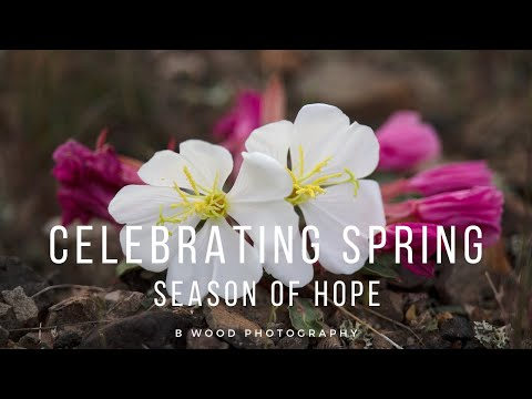 Celebrating Spring | Season of Hope 🌻