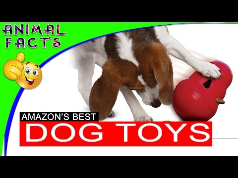 5 Best Interactive Dog Toys on Amazon Dogs 101 - Animal Facts