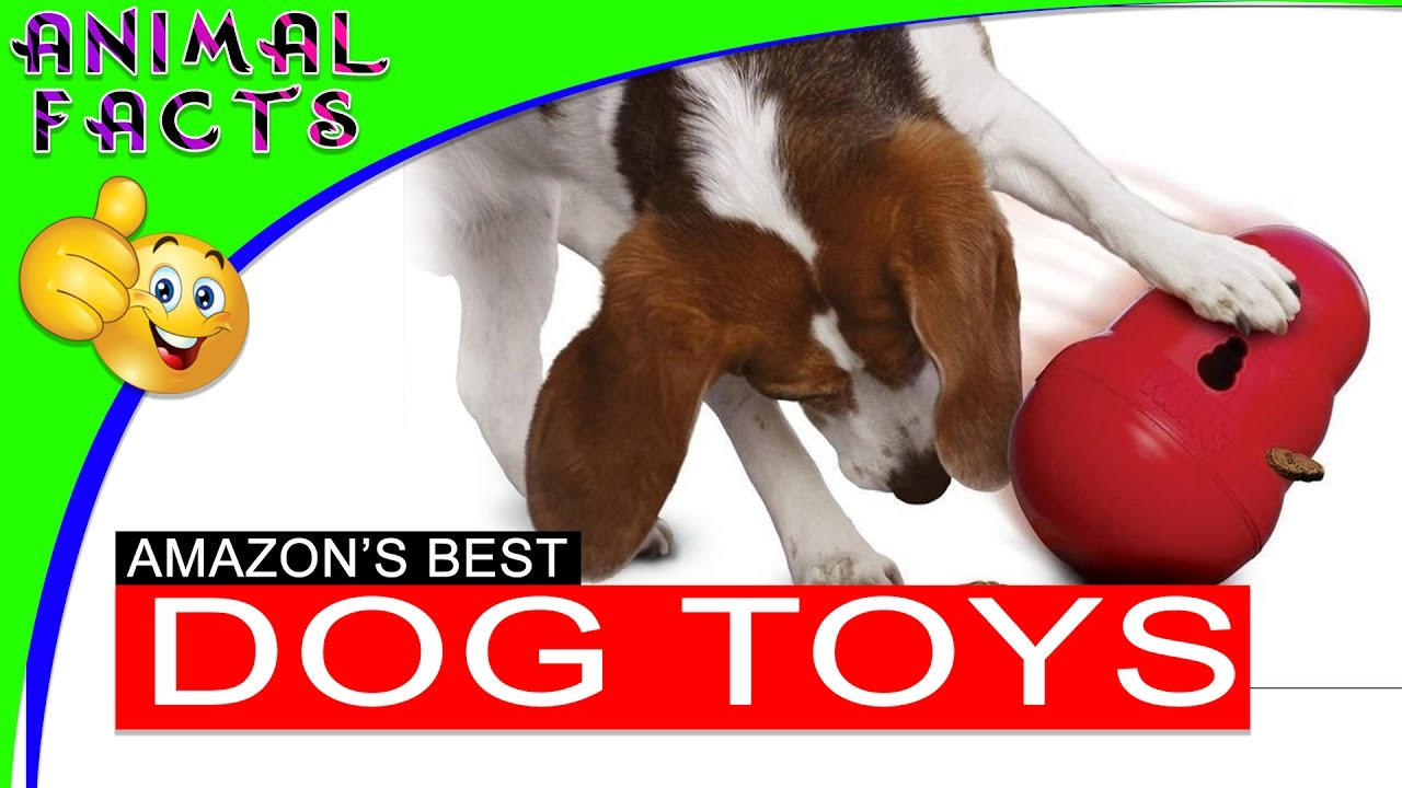 5 Best Interactive Dog Toys On Amazon Dogs 101  Animal Facts