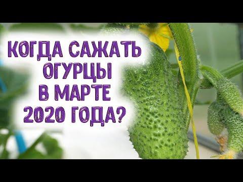 Когда сажать огурцы в марте 2020 года? Выбираем благоприятные дни для посева семян огурцов на рассад | календарь | горяченко | посевной | гороскоп | март_2020 | лунный | раиса | года | мар | на
