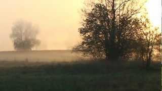 Журавль и радуга 7 хайку Голоса птиц в мае