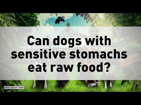 8 Can Dogs With Sensitive Stomachs Eat Raw Dog Food