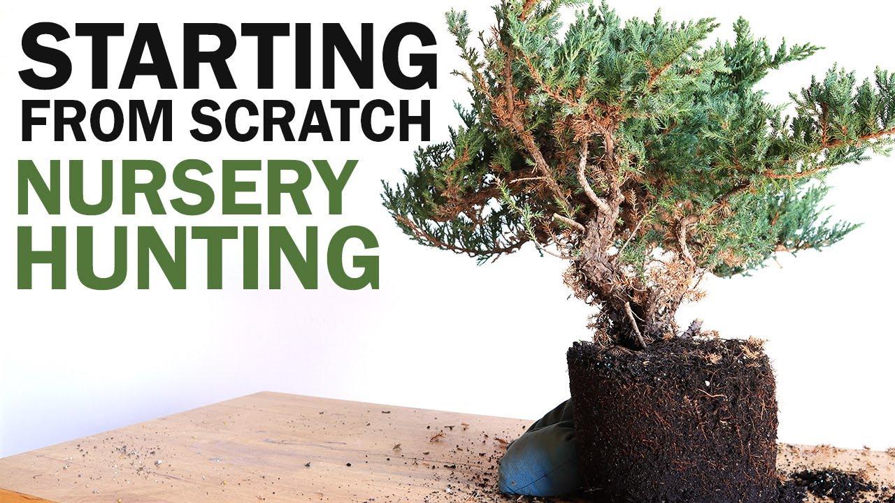 Bonsai Nursery Hunting - Starting from Scratch
