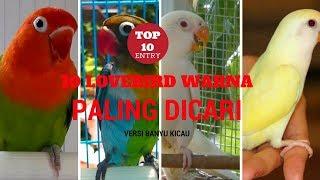 Video TERNYATA INI 10 LOVEBIRD WARNA PALING DICARI download MP3, 3GP, MP4, WEBM, AVI, FLV Juni 2018