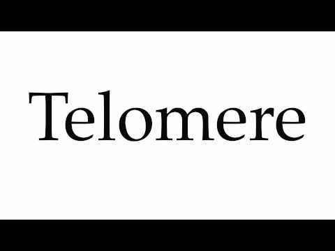 How to pronounce 'telomere' — and why it should be in your