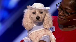 Counting Canine's Act Adds Up for the Judges - America's Got Talent 2017