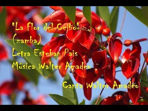 LA FLOR DEL CEIBO - WALTER AMADEO