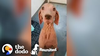 Furless Dog Has Complete Transformation After Being Found