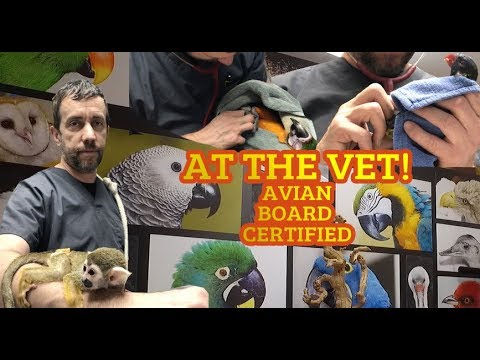 We are at a Avian board certified Exotic Veterinary clinic for PARROTS