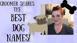 BEST DOG NAMES FROM A DOG GROOMER! MALE, FEMALE, UNISEX PET NAMES!