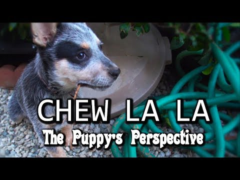 Chew La La – Puppy Perspective (Teething)