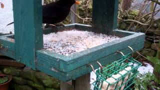 Allotment Diary Close-up Bird Table Cam Robin Redbreast Long Tailed Tit