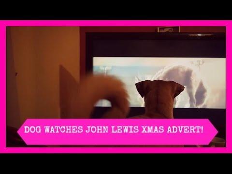 DOG WATCHES JOHN LEWIS XMAS ADVERT!