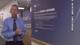 Scale of the Human Genome (with animations) - Eric Green