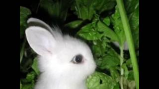 Забавные , милые ,смешные кролики,zoo, новая подборка 2016