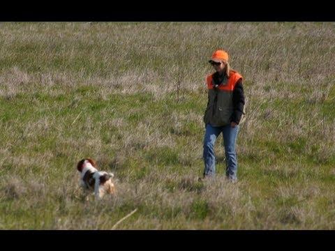 akc-pointing-dog-junior-hunt-test-(shawna-first-run)
