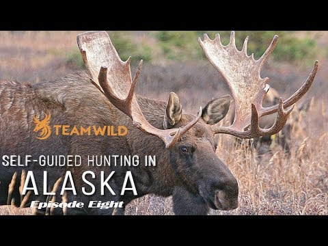 Self-guided Moose & Caribou Hunting In Alaska: Episode 8 - The Moose Of A Lifetime