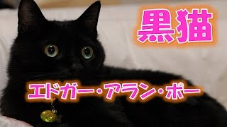 【名作 朗読】黒猫 / エドガー・アラン・ポー