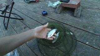 Озеро Палецкое, 22 июля 2019 год. Ищем ключик к рыбе. Видеоблог.
