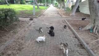 12 cats🐈Stray cat circus 5😸12 котов Уличный кошачий цирк😼 Zircus streunende katzen🐱野生の猫サーカス