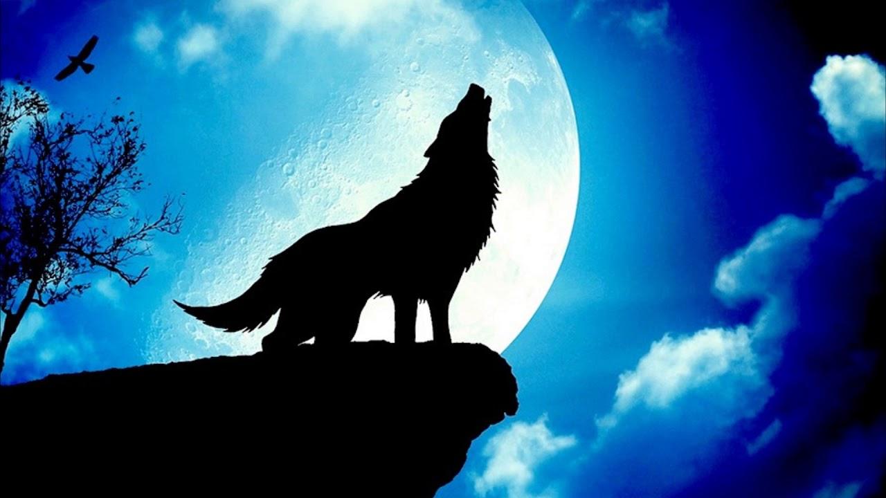 Почему волки воют на луну? - YouTube
