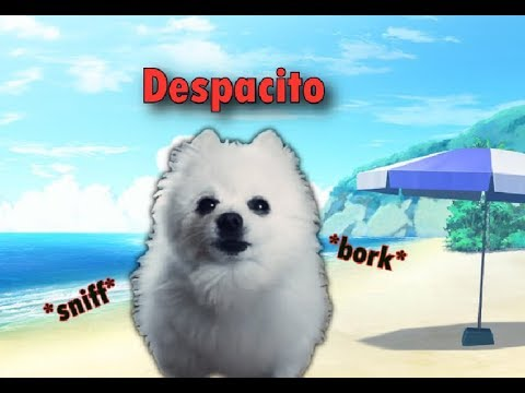 Despacito - gabe cover
