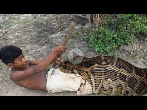 Primitive Technology: Simple DIY Python Snake Trap Using real hand That Work 100%