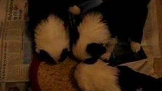 Puppies eten Deel 1