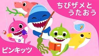 サメかぞくのいちにち | サメのかぞく | ちびザメとうたおう | どうぶつのうた | ピンキッツ童謡