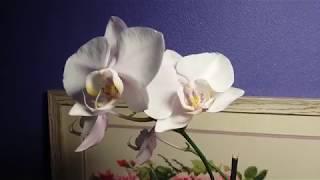 176 #Вышивальная неделя/Готовая вышивка от Алисы Ценитель кофе/Влог/Моя орхидея радует