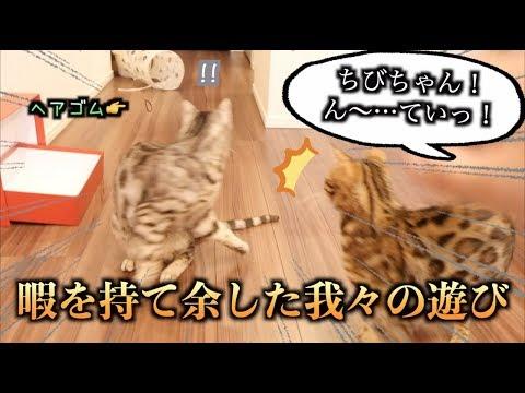 ヘアゴムを投げる掛け声だけで荒ぶる猫たち