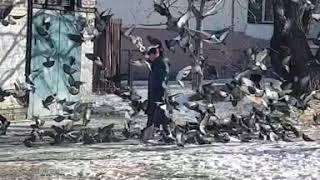 """Ремейк фильма Альфреда Хичкока """"Птицы"""""""