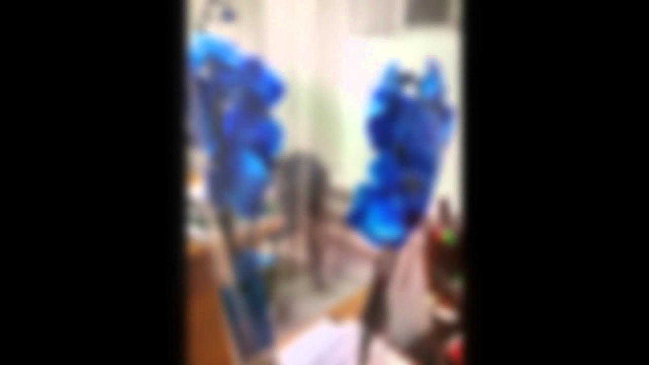 Синяя орхидея стала белой почему