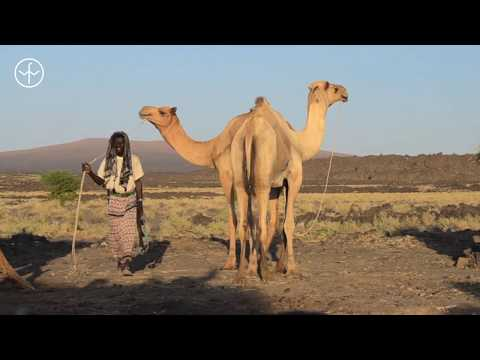 60 Second Guide to Ethiopia