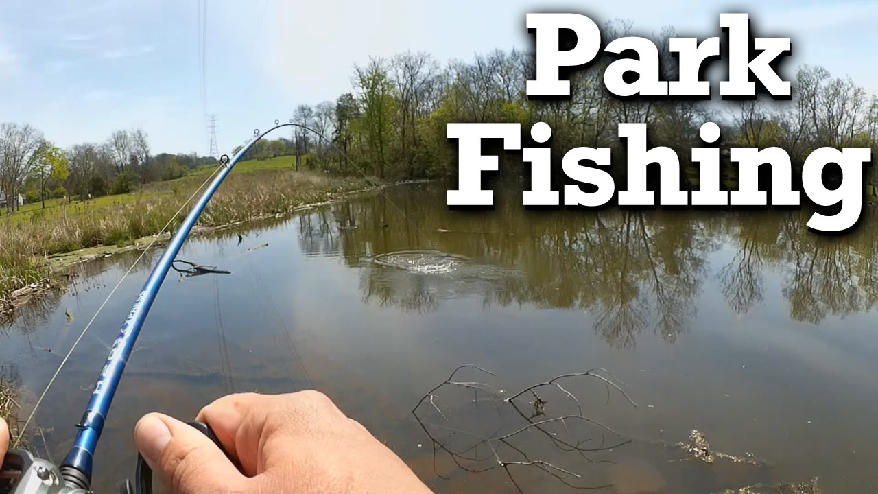 Bank fishing for bass public park bass from shore youtube for Bank fishing for bass