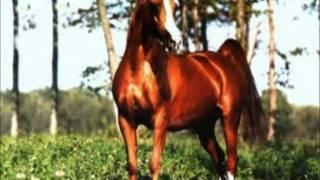 Красивое слайд-шоу о лошади