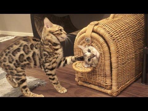猫の脱出ゲーム