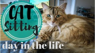 A Day in the Life CAT SITTING | What it's like to be a cat sitter