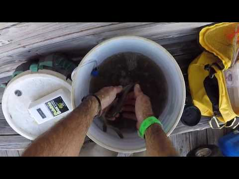 HOW I CATCH KEEPER TROUT AT FOLLY BEACH PIER / JUNE 2019