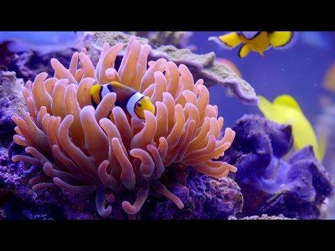 Nemo Aquarium: A Full HD Finding Nemo Screensaver