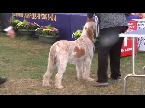 Richmond Dog Show 2016 - Gundog group FULL