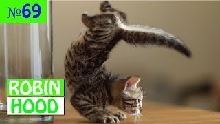 ПРИКОЛЫ 2017 с животными. Смешные Коты, Собаки, Попугаи // Funny Dogs Cats Compilation. Март №69