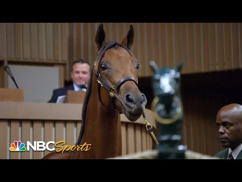 Champions born, bred and bid on in Kentucky | All In: Road to the Breeders' Cup Classic | NBC Sports